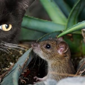 как можно избавиться от мышей