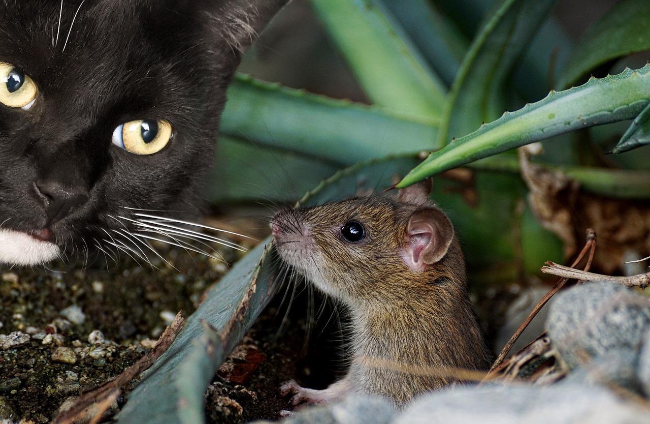Как избавиться от полевых мышей